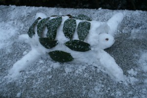 Asnd thi snow turtle was also lazing around in the park. Snowbathing perhaps?